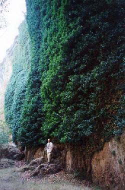 LA ENREDADERA (para los Cerrolaza Gili)